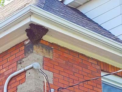 Swarm of Bees on House